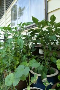 newhouse veg garden