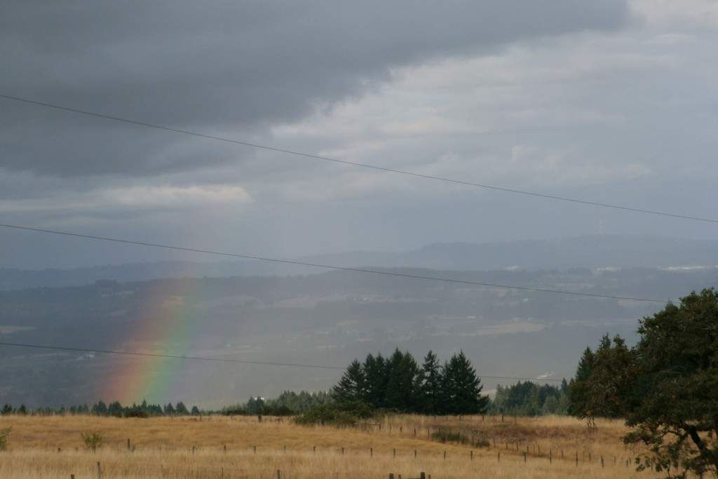 Looking for my Pot of Gold!